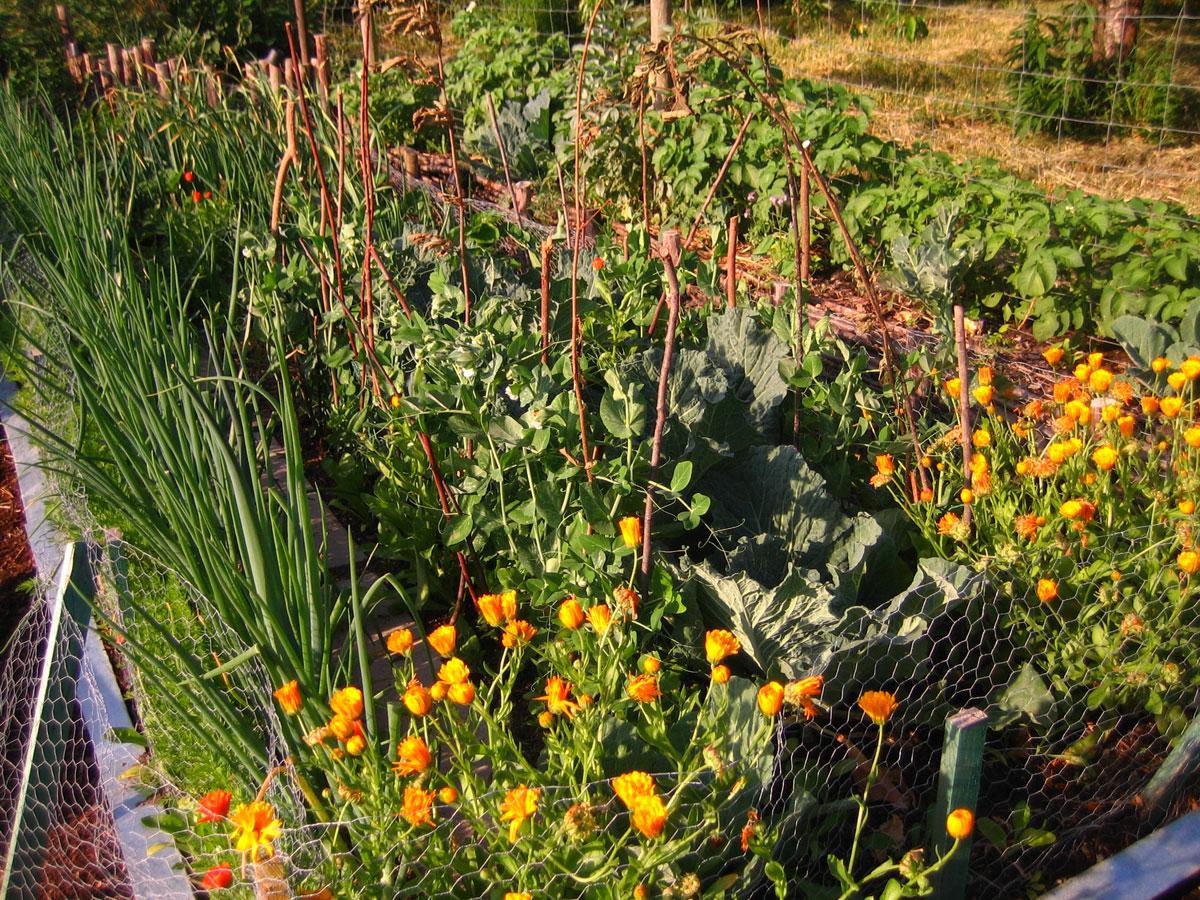 Bauern- und Nutzgärten