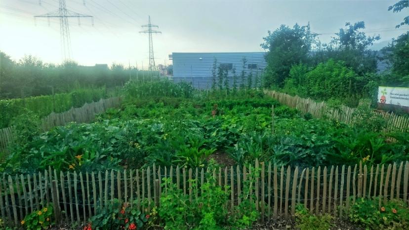 Der Garten im August 2016