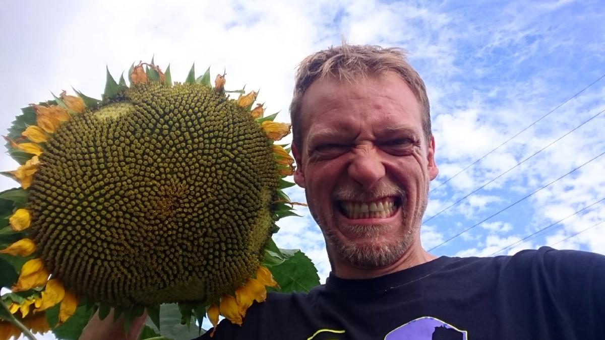 Eine Sonnenblume auf dem Acker der GS Mülheim